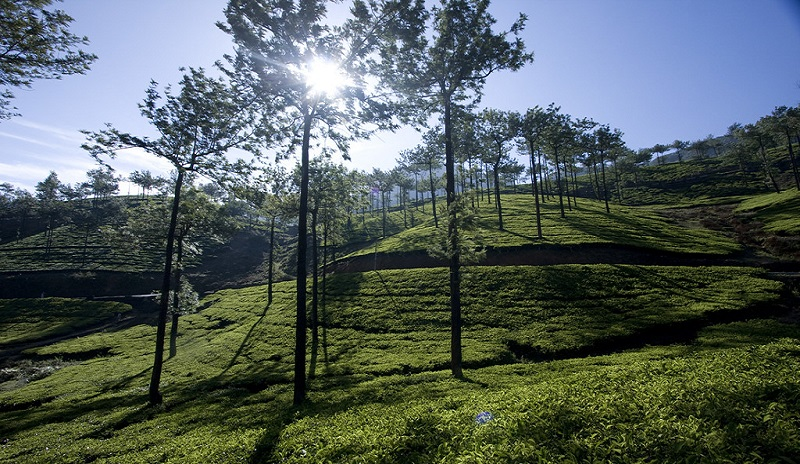 Vagamon best places to visit in Kerala